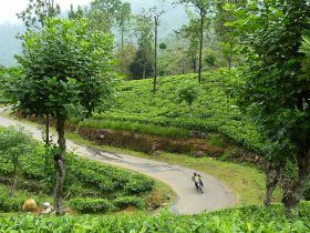 vietnam motorcycle tours mountains and beaches the best of Sri Lanka 1 280x210